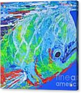 semi abstract Mahi mahi Acrylic Print