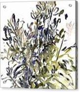 Senecio And Other Plants Acrylic Print