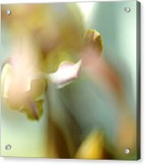 Sensual Touch Of Exotic. Orchid II Acrylic Print