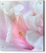 Sensuality. Peach Hibiscus. Macro Acrylic Print by Jenny Rainbow