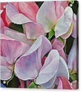 Senteur en couleur Acrylic Print