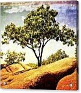 Sentinal Tree Acrylic Print