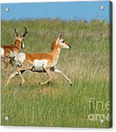 Separate Ways Acrylic Print