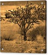 Sepia Cacti Roadside Acrylic Print