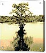 Sepia Cypress Chicot Sp Louisiana Acrylic Print