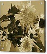Sepia Garden Sunflower Bouquet Acrylic Print