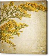 Sepia Gold Acrylic Print