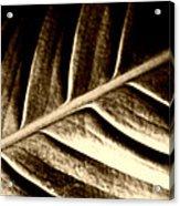 Sepia Leaf Acrylic Print
