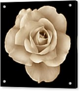 Sepia Rose Flower Portrait Acrylic Print