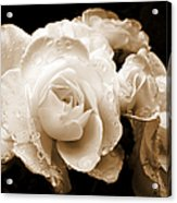 Sepia Roses With Rain Drops Acrylic Print by Jennie Marie Schell