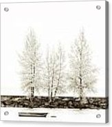 Sepia Square Diptych Tree 12-7693 Set 1 Of 2 Acrylic Print