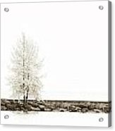 Sepia Square Diptych Tree 12-7693 Set 2 Of 2 Acrylic Print