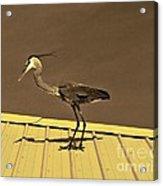Sepia Toned Heron On Rooftop Acrylic Print