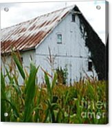 September Corn Barn Acrylic Print
