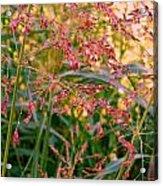 September Grasses Acrylic Print