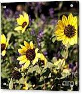September Yellow Acrylic Print