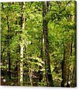 September's Woodlands Acrylic Print