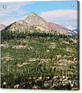 Sequoi National Park Acrylic Print