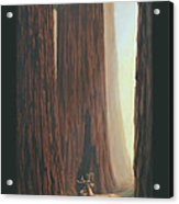 Sequoia Blacktail Deer Phone Case Acrylic Print by Crista Forest