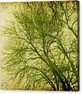 Serene Green 1 Acrylic Print by Wendy J St Christopher