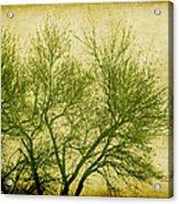 Serene Green 2 Acrylic Print