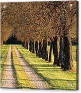Serene Lane Acrylic Print