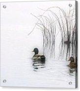 Serene Moments Acrylic Print