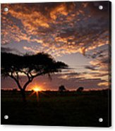 Serengeti Sunrise Acrylic Print