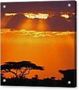 Serengeti Sunset Acrylic Print
