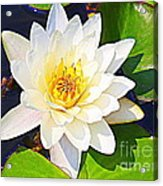 Serenity In White - Water Lily Acrylic Print