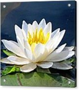 Serenity On The Lily Pond Acrylic Print