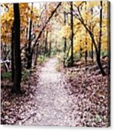 Serenity Walk In The Woods Acrylic Print