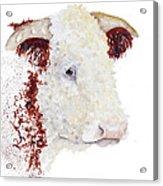 Sergeant Major Is A Hereford Bull Acrylic Print