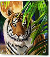 Second In The Big Cat Series - Tiger Acrylic Print