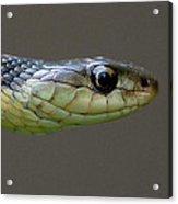 Serpent Profile Acrylic Print