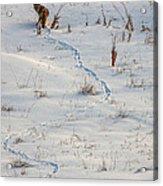 Serpentine Searcher Acrylic Print