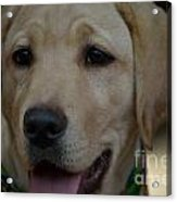 Service Dog In The Making Acrylic Print