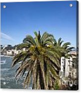 Sestri Levante And Palm Tree Acrylic Print
