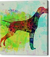 Setter Pointer Watercolor Acrylic Print