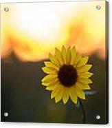 Setting Sun Flower Acrylic Print