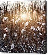Setting Sun In Winter Forest Acrylic Print