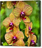 Seven Blooms Acrylic Print