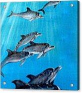 Seven Dolphins Acrylic Print