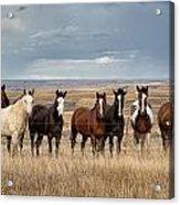 Seven Horses On The Range Acrylic Print
