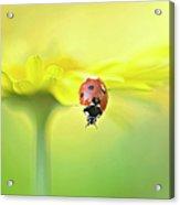 Seven Spot Ladybird On Yellow Flower Acrylic Print