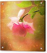 Shabby Chic Rose Print Acrylic Print