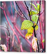 Shades Of Autumn - Reds And Greens Acrylic Print