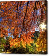 Shades Of Autumn Acrylic Print
