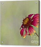 Shades Of Beauty Acrylic Print