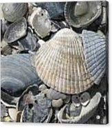Shades Of Blue Shells Acrylic Print